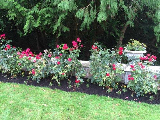 Adare Manor: Roses still in bloom in November!