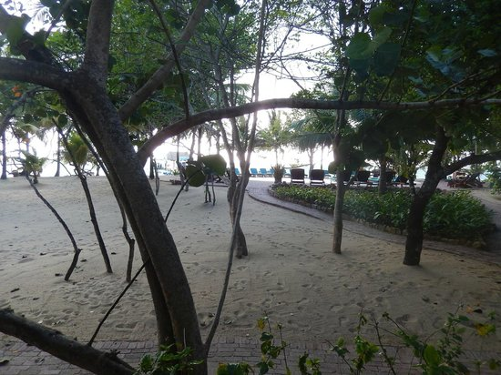 Hamanasi Adventure and Dive Resort : view from the room