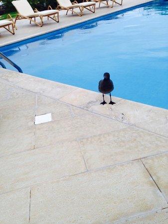 Finch Bay Galapagos Hotel: Gli piace bere qui!