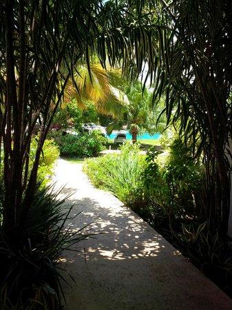Hotel Alisei : Beautiful garden