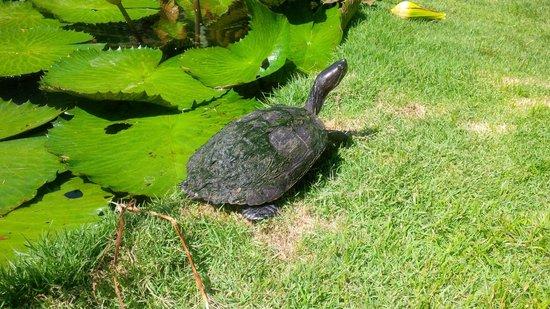 Hotel Alisei : Turtles in the garden