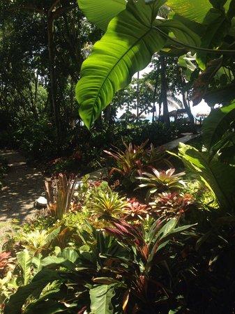 Hotel Banana Azul: Lush Gardens