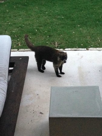 Blue Diamond Luxury Boutique Hotel: Animal visited our patio daily…cute but beware!