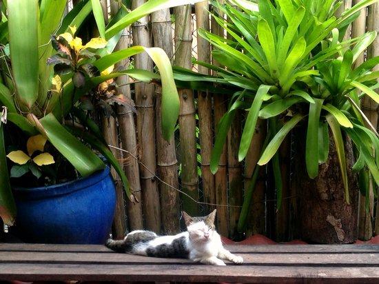 Hotel Banana Azul: Resident Cat
