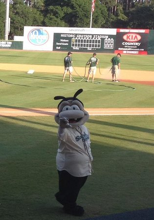 Grayson Stadium : Sand Gnats mascot adorable Gnate!