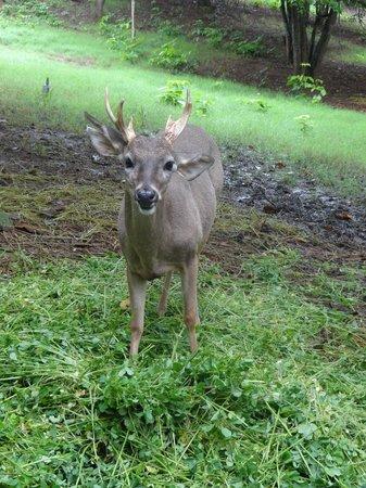 Hillary Nature Resort & Spa: Zoologico, sin costo adicional
