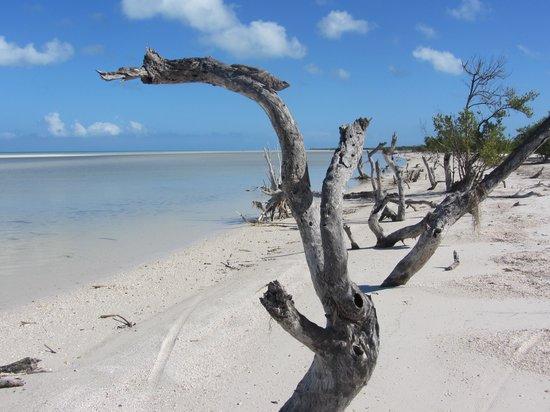 Villas HM Paraiso del Mar: Natur pur