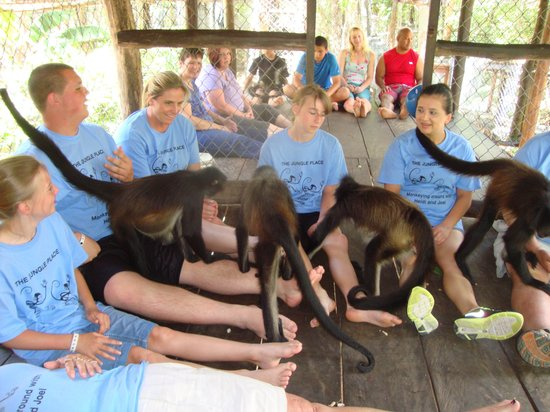 The Jungle Place - Tours: How can you not love these monkeys