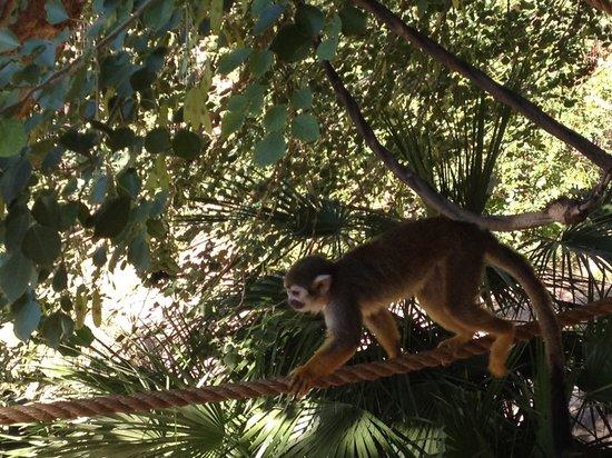 Phoenix Zoo : 귀여운 원숭이