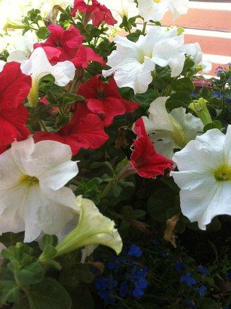 Paula's Pancake House: Flowers, flowers everywhere ...