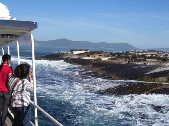 City Sightseeing: Trip to Seal Island from Hout Bay