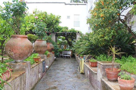Hotel La Certosella: grounds