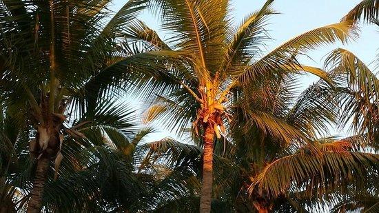 Kon-Tiki Resort : View from one of the several hammocks