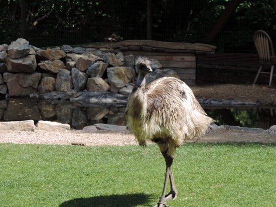 Lake Country Inn: Ostrich at Kangaroo farm