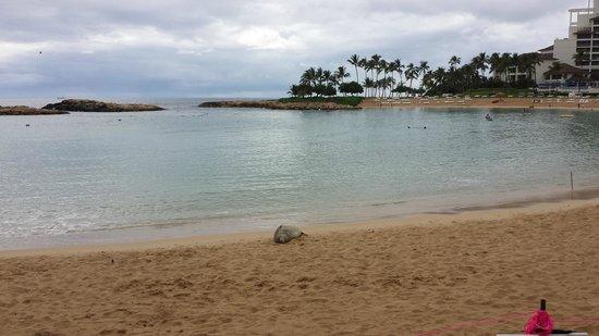 Ko Olina Lagoons: A seal enjoying the beach.