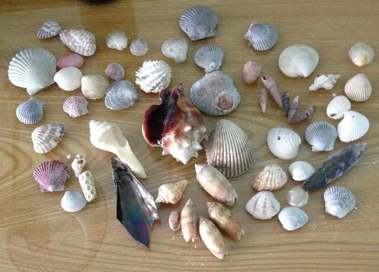 Outrigger Beach Resort: The gulfs bounty of shells