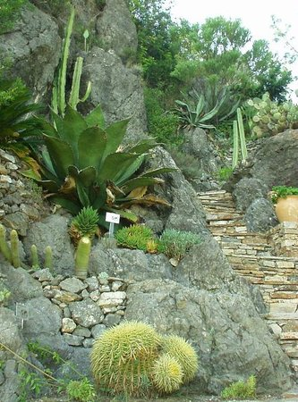 Occitanie, Francja: Succulents at the Mediterranean Garden in Roquebrun