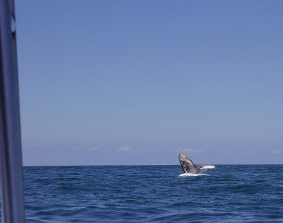 Taheima Wellness Resort & Spa : Whale watching in Nuevo Vallarta