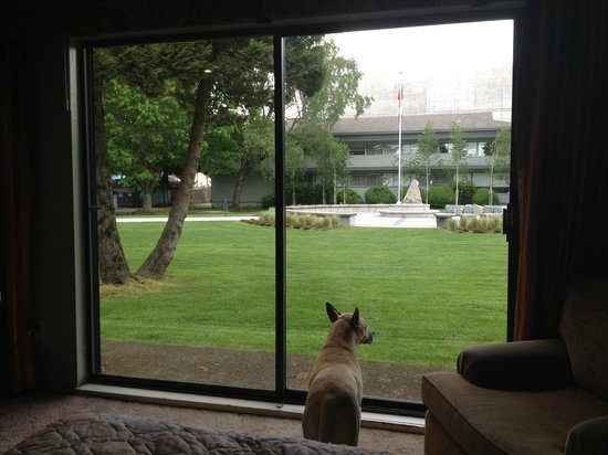 August Jack Motor Inn: She's watching for other dogs. We saw many dogs out playing. Bella even got to go out and join i