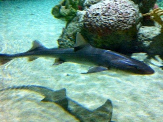 Moray Picture Of Austin Aquarium Austin Tripadvisor