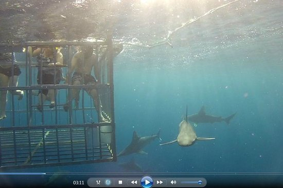 North Shore Shark Adventures : Pulled from video purchased, a lot of the time the cage wasn't in the camera's lens