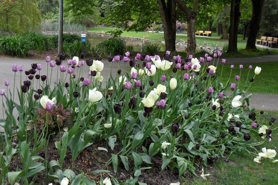 Ramada Limited Vancouver Airport: Tulips and pond in park
