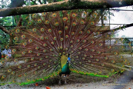 4700 Gambar Hewan Hewan Kebun Binatang Terbaik