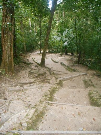 Hotel Jaguar Inn Tikal: Road from the Inn to the central areas of the Tikal National Park