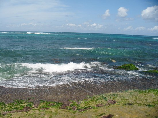 Laniakea Beach: If you look closely there are at least 6 turtles in the water here