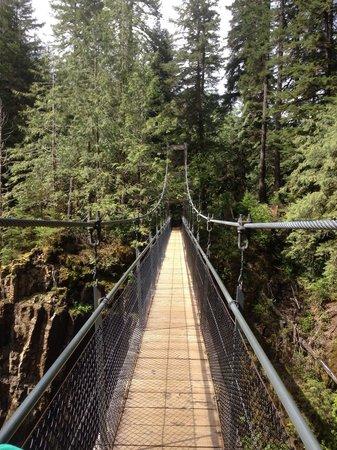 Drift Creek Falls Trail: The suspension bridge at Drift Creek Falls.