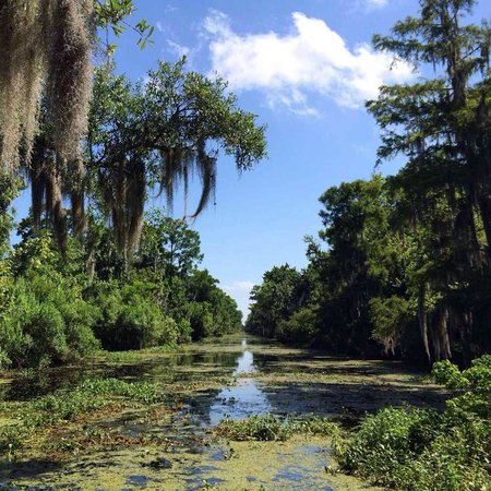 Tours by Isabelle: Feel at peace traveling through the Bayou waterways