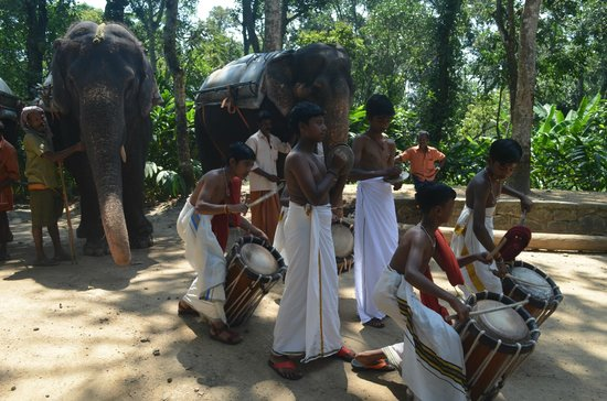 Elephant Junction - Day Tours: welcome scene