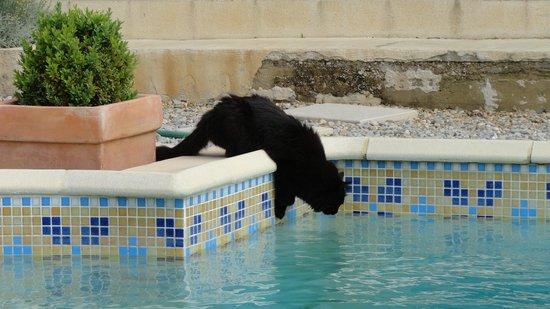 Mas L'Outinado : Doudou et la piscine