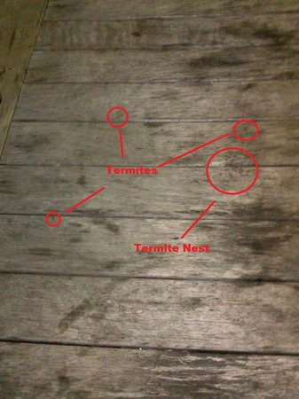 Shem Creek Bar and Grill: Termite table.