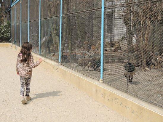Jardin d'Acclimatation : Alguns dos animais q há no parque