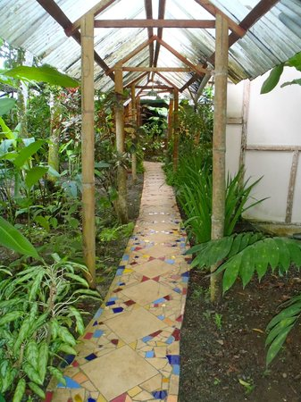 Jacaranda Hotel and Jungle Garden: Pathway to room