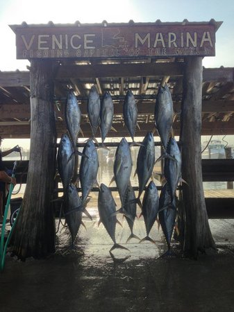 Home Run Fishing Charters