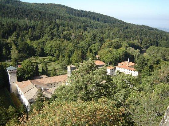 Hotel La Foresta: Siamo immersi nel Verde del Bosco, tra corsi d'Acqua e Animali bellissimi!!
