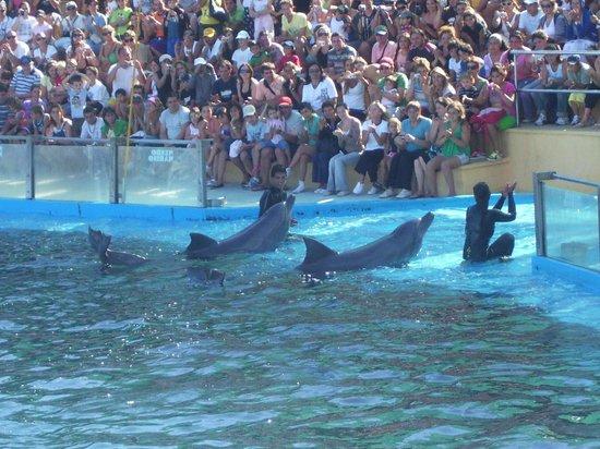 Mundo Marino: Show de delfines