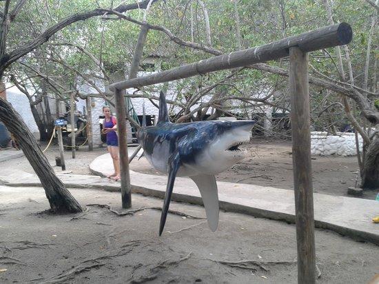 Tours in Rosario islands : lo mejor para un buen recuerdo fotografico