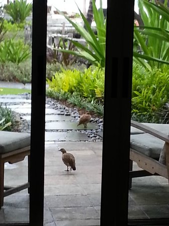 Four Seasons Resort Hualalai: These birds visited every morning
