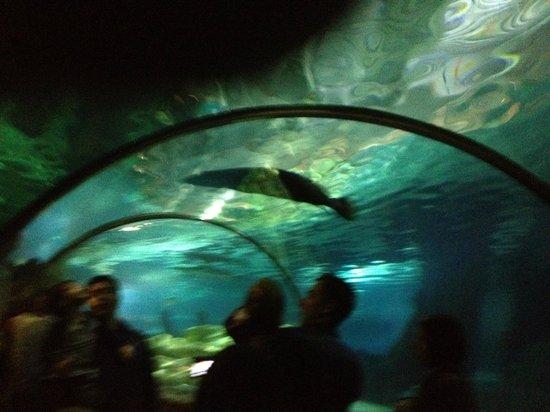 Aquarium Fotograf A De Sea Life Minnesota Bloomington