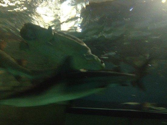 aquarium picture of sea minnesota bloomington tripadvisor