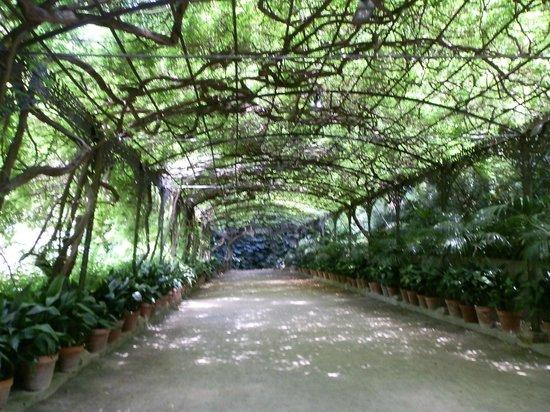 La Concepcion Jardin Botanico Historico de Malaga: Microclima junto a la residencia
