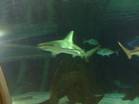 Aquarium Picture Of Sea Life Minnesota Aquarium