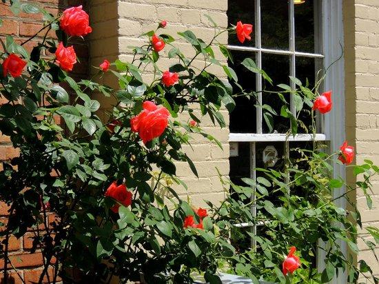 Roses at Cafe La Ruche
