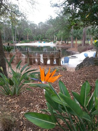 Champions World Resort: Bird of Paradise --one of many flowers in the Karlance Park