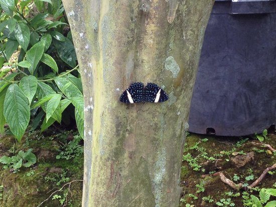Butterfly World : Butterfly on tree