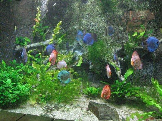 Grand Aquarium de Touraine : Poissons tropicaux