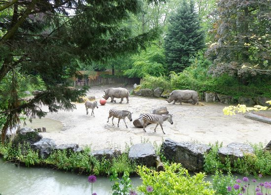 Parc Zoologique: Rhinos and zebras at Lille zoo: better than on safari!